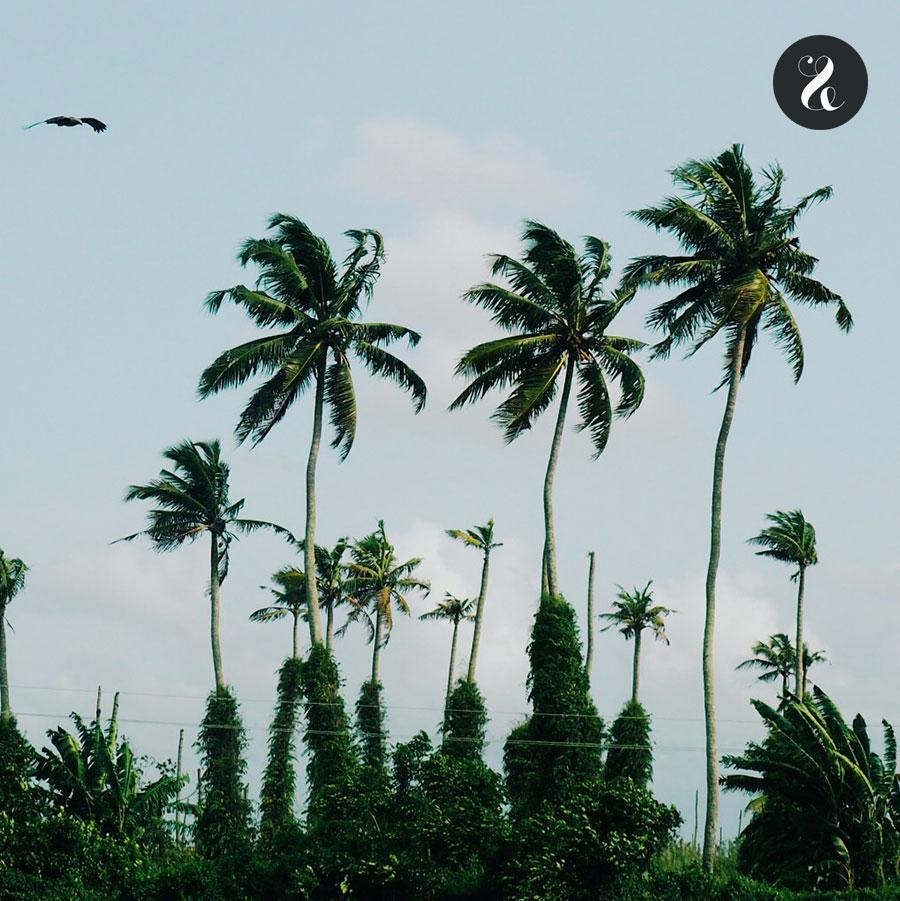 kerala-palmeras
