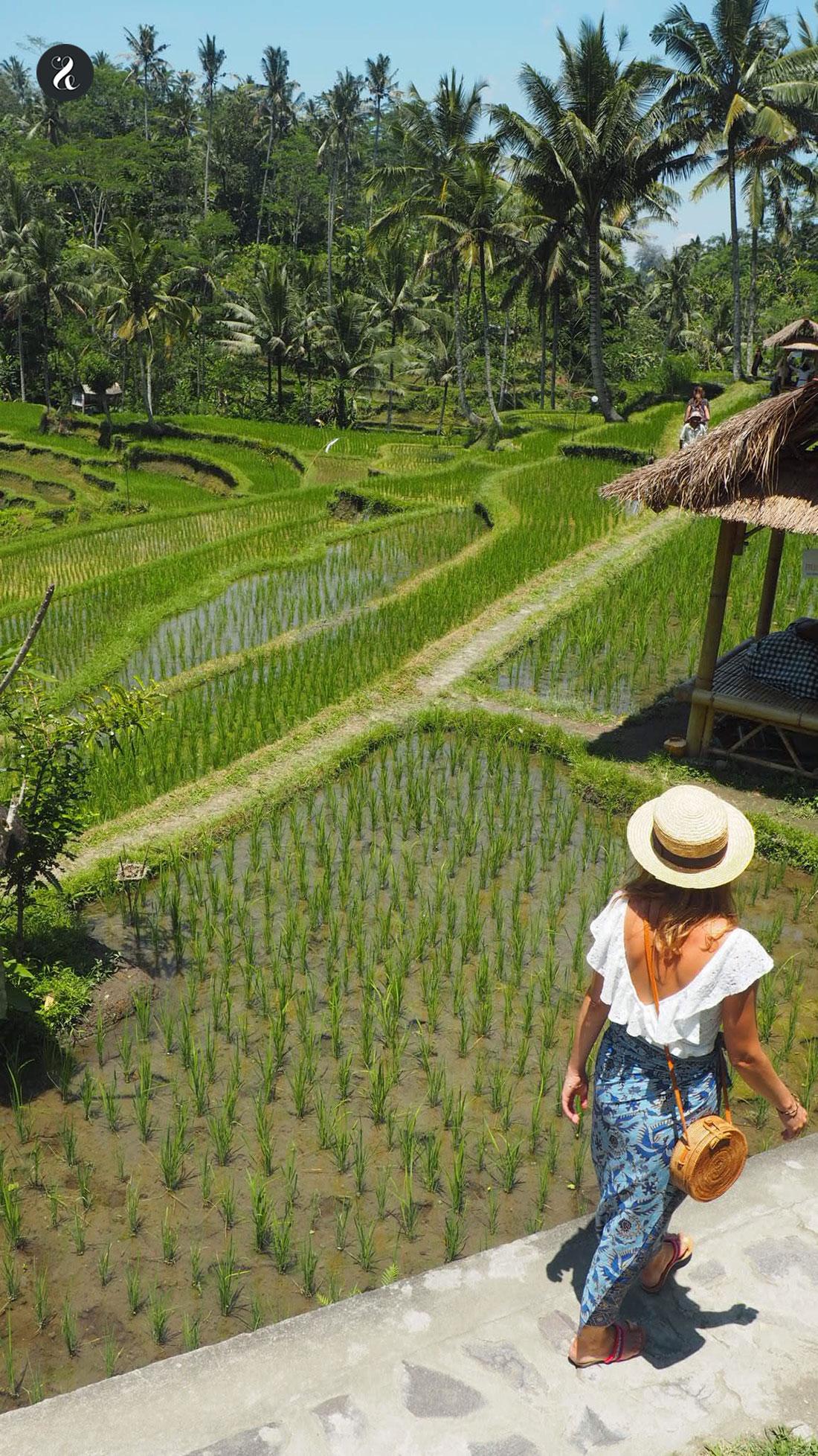arrozales en Bali guía Indonesia