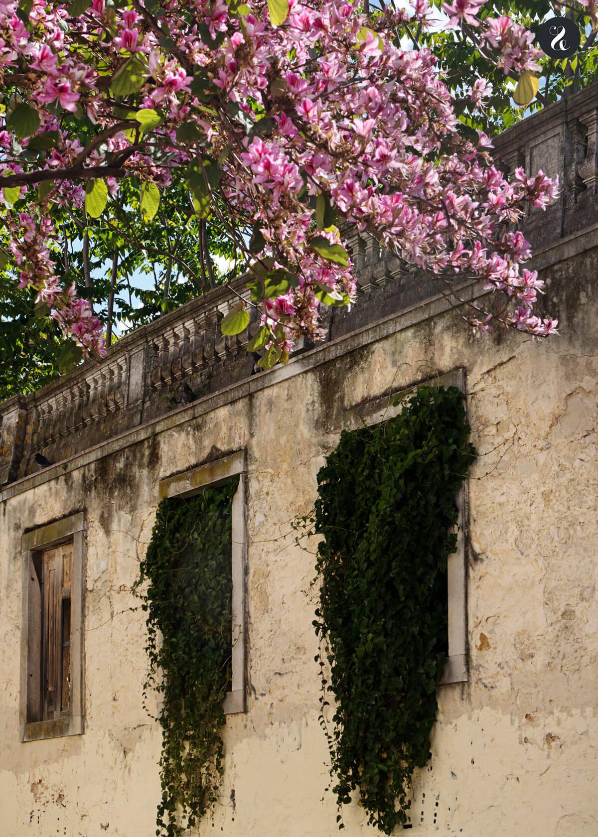 Qué ver en Lisboa - Barrio de Alfama